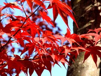 昭和記念公園0286.jpg