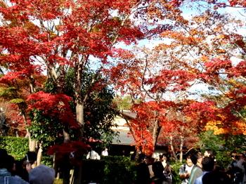 昭和記念公園0323.jpg