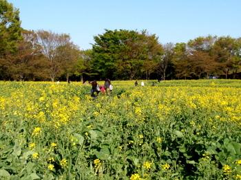 昭和記念公園0331.jpg