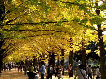 昭和記念公園0336.jpg