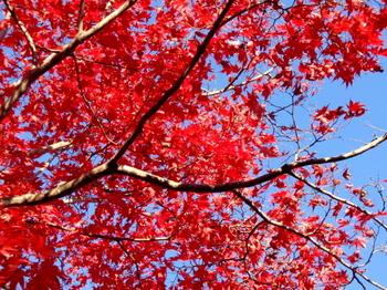 昭和記念公園0941.jpg