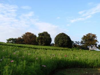 昭和記念公園0987.jpg