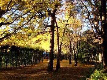 昭和記念公園1008.jpg