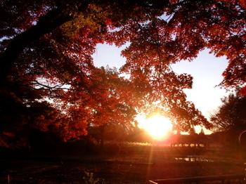 昭和記念公園1037.jpg