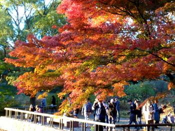 昭和記念公園1045.jpg