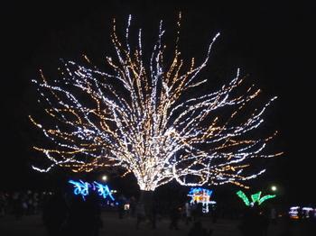 昭和記念公園1106.jpg