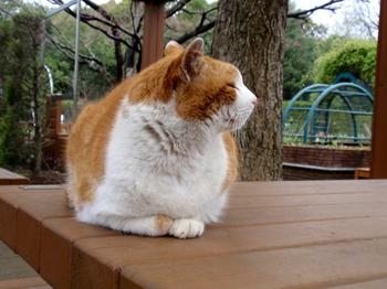 昭和記念公園1217.jpg
