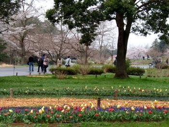 昭和記念公園1233.jpg