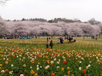 昭和記念公園1251.jpg