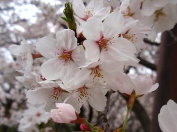 昭和記念公園1295.jpg