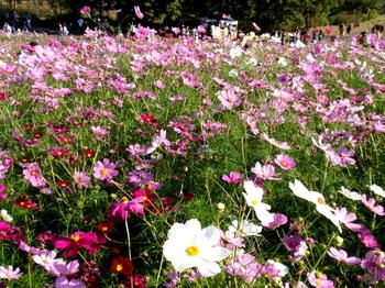 昭和記念公園1377.jpg