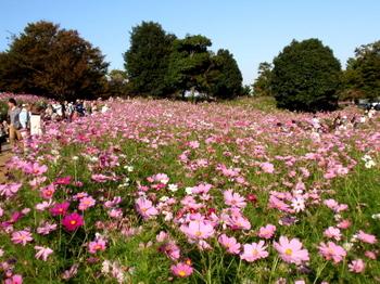 昭和記念公園1387.jpg