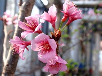 花と緑の振興センター0013.jpg