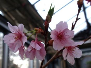 花と緑の振興センター0014.jpg