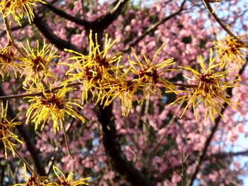 花と緑の振興センター0027.jpg