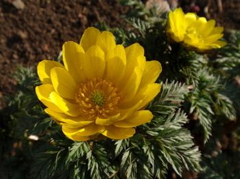 花と緑の振興センター0047.jpg