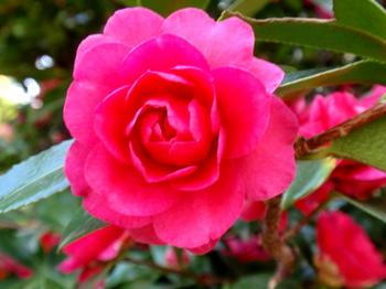 花と緑の振興センター0093.jpg