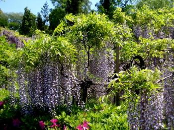 花と緑の振興センター0121.jpg