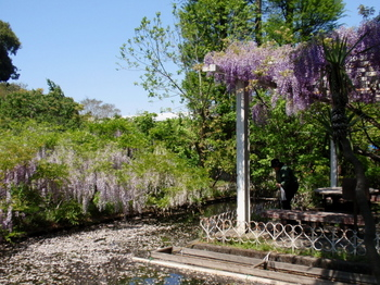 花と緑の振興センター0137.jpg