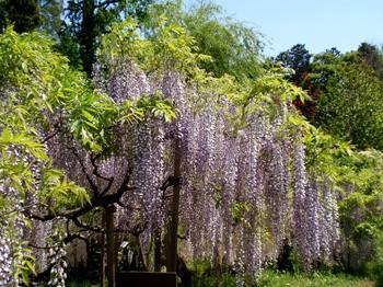 花と緑の振興センター0164.jpg