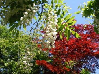 花と緑の振興センター0165.jpg