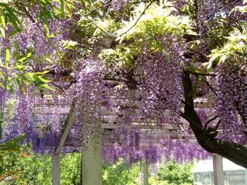 花と緑の振興センター0195.jpg
