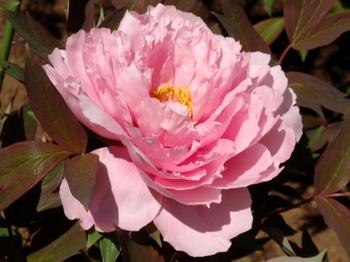 花と緑の振興センター0209.jpg