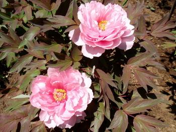 花と緑の振興センター0219.jpg