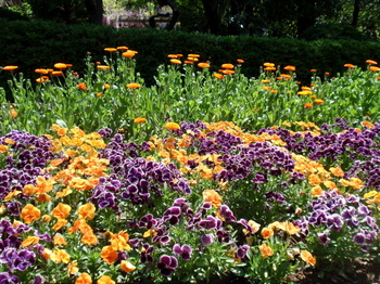 花と緑の振興センター0237.jpg