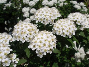 花と緑の振興センター0269.jpg