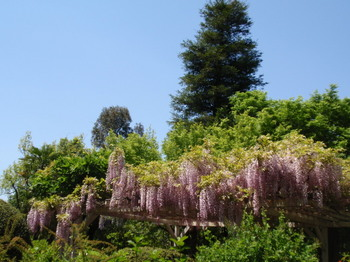 花と緑の振興センター0279.jpg