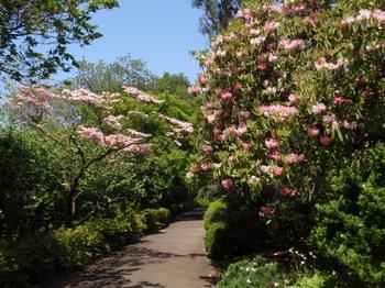 花と緑の振興センター0287.jpg